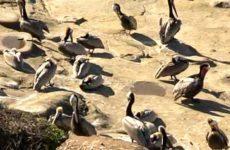 Birds sun-bathing in the sand.