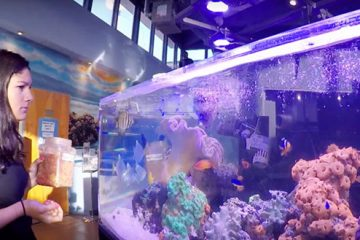 student feeding sea animals in aquarium